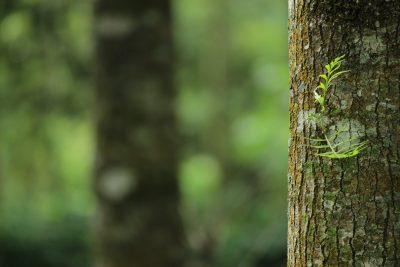 peinture sur arbre